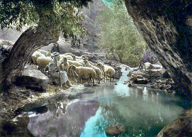 Good Shepherd watering his sheep